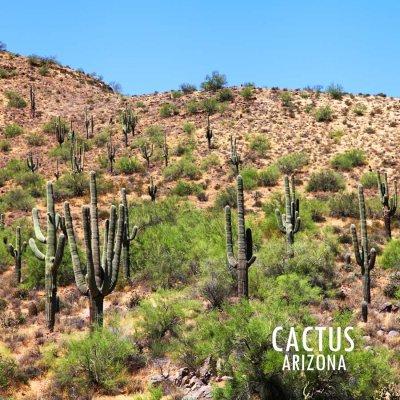 画像2: アメリカ アリゾナ州 ナンバープレート・グランドキャニオンステイト ライセンスプレート/ARIZONA GRAND CANYON STATE License Plate