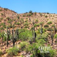 画像2: アメリカ アリゾナ州 ナンバープレート・グランドキャニオンステイト ライセンスプレート/ARIZONA GRAND CANYON STATE License Plate (2)